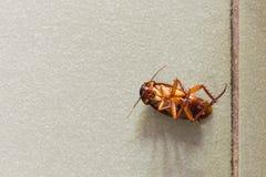 kakkerlakken stock foto