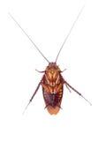 kakkerlakken stock fotografie