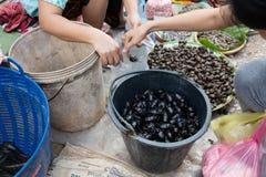 kakkerlakken bij markt stock foto