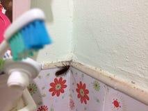 Kakkerlakken in de badkamers royalty-vrije stock afbeeldingen