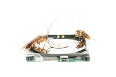 Kakkerlakken die op harde schijfaandrijving beklimmen royalty-vrije stock foto's