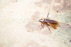 Kakkerlakken en mieren royalty-vrije stock foto's