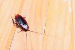 Kakkerlakken het sterven close-up op houten lijst in keuken stock foto's