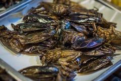 Kakkerlakken op de Thaise markt royalty-vrije stock fotografie