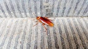 Kakkerlakken op de vloer royalty-vrije stock foto