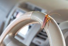 Kakkerlakken op het stuurwiel van de auto stock foto