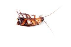 Kakkerlakken op witte achtergrond stock afbeelding