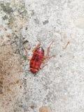 Kakkerlakkenmatrijs op de cementvloer na wordt geraakt door insecticide royalty-vrije stock afbeeldingen