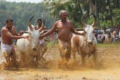 Kakkoor公牛赛跑的节日 库存图片