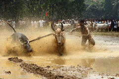 Kakkoor公牛赛跑的节日 免版税库存照片