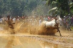 Kakkoor公牛赛跑的节日 免版税库存图片