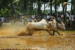 Kakkoor公牛赛跑的节日 图库摄影
