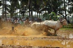 Kakkoor公牛赛跑的节日 库存照片