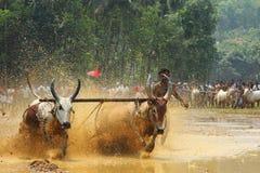 Kakkoor Bull racing festival Stock Photos