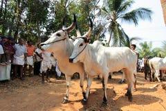 Kakkoor Kalavayal Festival stock photos