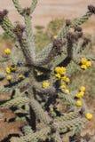 Kakteen in der Blüte stockfoto