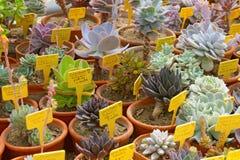 Kakteen im botanischen Garten Lizenzfreie Stockfotografie