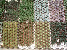 Kakteen und Succulents. Stockbilder