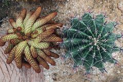 Kaktuns i tr?dg?rden royaltyfri fotografi