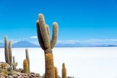 Kaktuns och saltar Royaltyfri Fotografi
