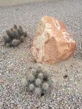 Kaktuns och vaggar Royaltyfri Foto