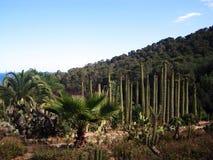 Kaktuns parkerar, Barselona Arkivbilder