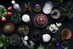 Kaktuns, suckulenta v?xter, tulpan och dekorativt vaggar p? den svarta tabellen ovanf?r sikt fotografering för bildbyråer