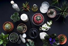 Kaktuns, suckulenta v?xter, tulpan och dekorativt vaggar p? den svarta tabellen ovanf?r sikt royaltyfria bilder