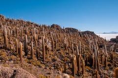 Kakturs på Isla Inca Huasi i Salar De Uyuni arkivbilder