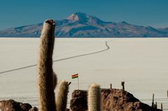 Kakturs på Isla Inca Huasi i Salar De Uyuni fotografering för bildbyråer