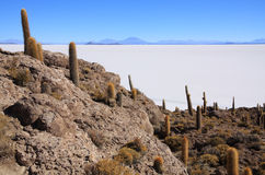 kaktusów Del Isla pescado Zdjęcie Stock