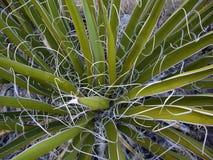 kaktusów faborki Fotografia Stock