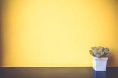 Kaktusów garnki na kolor żółty ścianie Fotografia Royalty Free