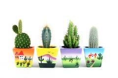kaktusów kolekci odosobniony biel Obraz Royalty Free