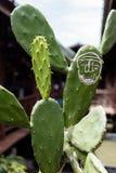 Kaktusów w dużym stopniu tło obraz royalty free