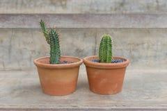 Kaktusökenväxt Royaltyfri Foto