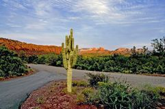 Kaktus 2 Lizenzfreie Stockfotos