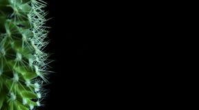 kaktus Arkivbild