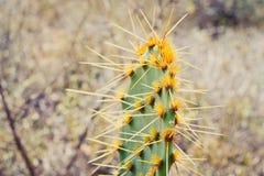 Kaktus 7 Royaltyfri Bild