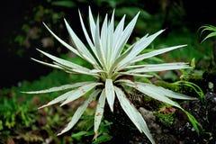 Kaktus Stockbilder
