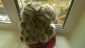 Kaktus Στοκ Εικόνες