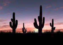 Kaktus Lizenzfreies Stockbild