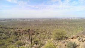 kaktus arkivbilder