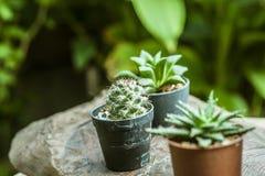 kaktus Royaltyfria Foton