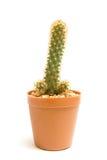 Kaktus Lizenzfreie Stockfotos