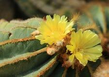 Kaktus Stockbild