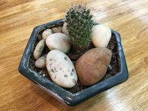 kaktus Arkivfoton