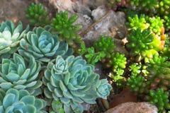 Kaktus Stockfotografie
