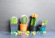 Kaktus 4 Arkivfoto
