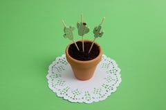 Kaktus Stockfotos